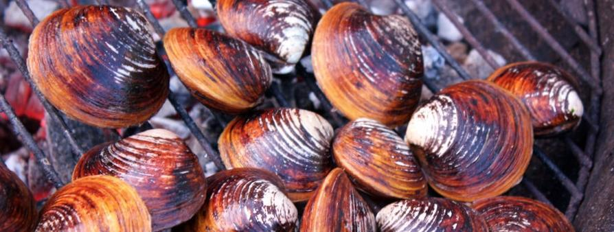 BBQ Clams and Mussels Grilled On The Barbecue