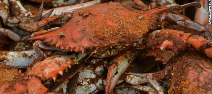 Jersey Blue Crabs Get No Respect - PhillyBite