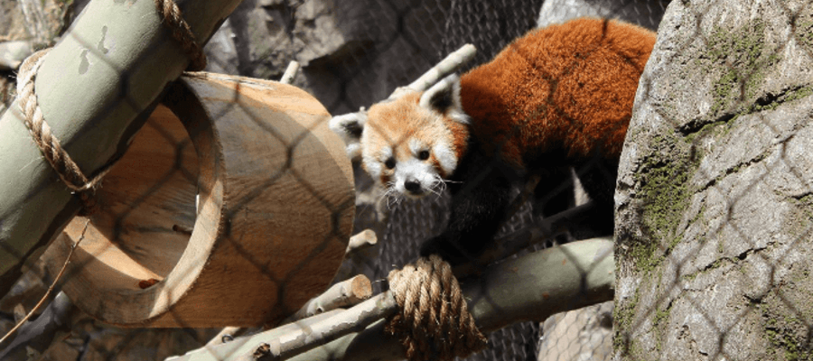 Philadelphia Zoo's Water is Life: Red Panda Pass and Otter Falls