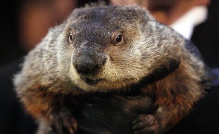 Punxsutawney Phil sees his shadow, predicts 6 more weeks of winter