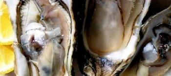 Guide to Cooking Great Oysters